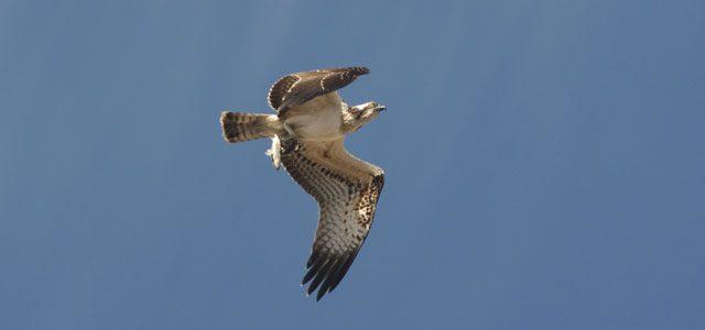 Hacer birdwatching en Xàbia