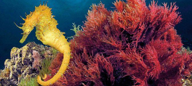 Las fabulosas criaturas que habitan en los fondos marinos de Xàbia