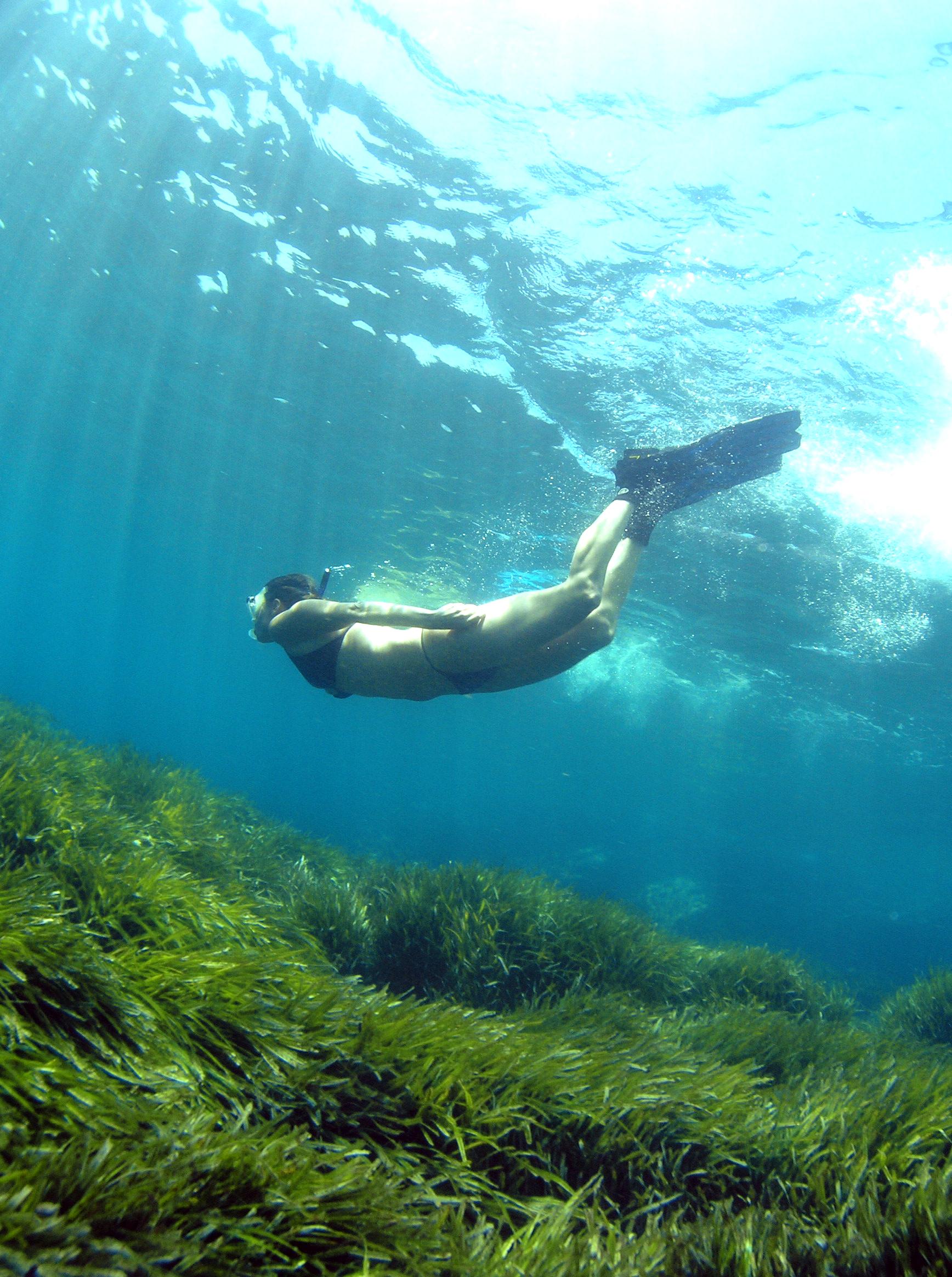 Pradera de poseidona en el mar de Xàbia